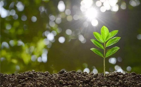 کاهش تغییرات آبوهوایی با بیوچار