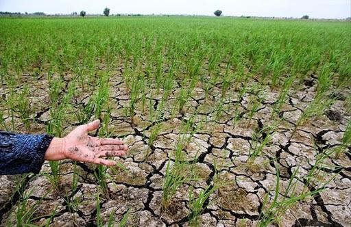 مساعدت و امهال مطالبات خسارت دیدگان بخش کشاورزی
