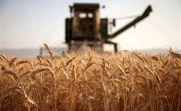 واریز کلیه وجوه گندم توسط بانک کشاورزی